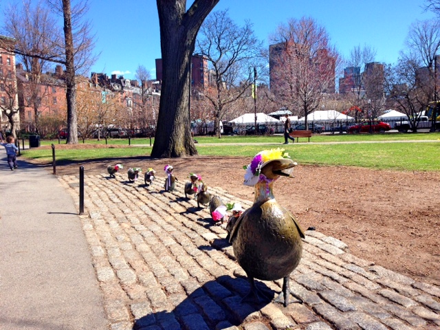 Ducklings at the Boston Common